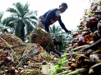 Visits to Overseas Markets Expand Oil Palm Export