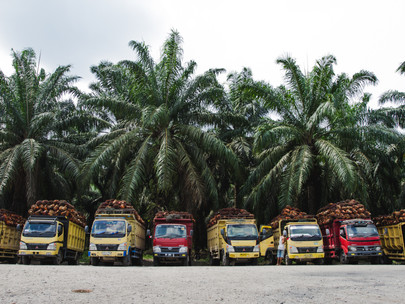 Memastikan Keberlanjutan Dalam Industri Minyak Sawit Indonesia