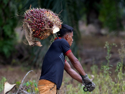 As UN Sustainability Deadline Looms, Credit Suisse Believes Palm Oil Sector's Best Bet Lies In Trans