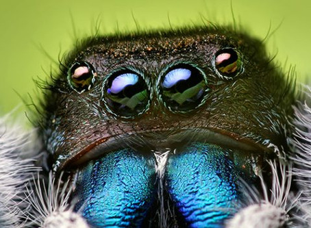 Researchers Develop Tiny Depth Sensor Inspired by Spider Eyes