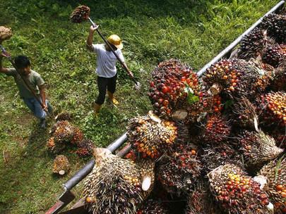 Sabah ingin menjadi pemimpin global dalam produksi minyak kelapa sawit berkelanjutan