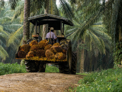 &Green Fund Makes Palm Oil Sector Investment in PT Dharma Satya Nusantara Tbk