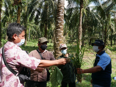Collaboration Is Key to Scaling up Training for Oil Palm Smallholders in Indonesia