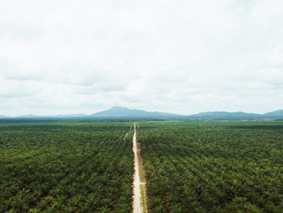 Cargill Engages US Customers with Roundtable for Sustainable Palm Oil Certified Supplies