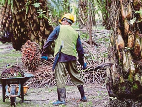 Mechanisation and Automation Vital For Smooth Operation of Nation's Oil Palm Plantations