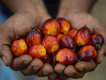 Singapore Emerges As Third-Largest Importer of Malaysian Palm Oil in ASEAN