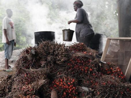 Investor minyak kelapa sawit industrial berjuang untuk mendapatkan tumpuan di Afrika
