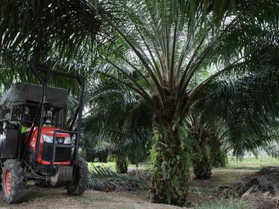 Permintaan Domestik Memastikan Industri Minyak Kelapa Sawit Indonesia Tetap Bertahan di Tengah Pasar