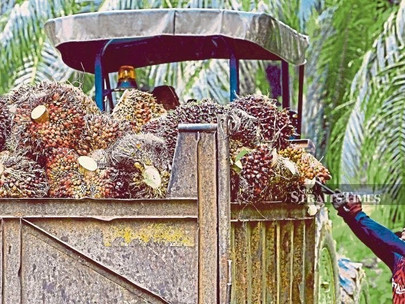 No Impact from US Boycott on Palm Oil Products