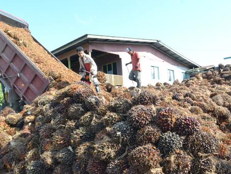 Bea ekspor Indonesia atas minyak kelapa sawit mentah dinaikkan pada bulan Desember menjadi 33 Dolar