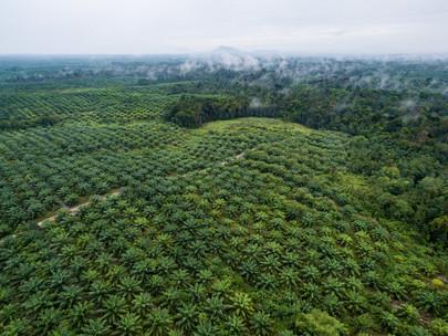 Pemerintah diminta tegas menindak produsen makanan yang gunakan label no palm oil