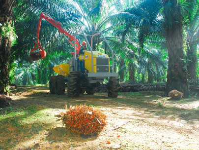 Palm Oil and Not Others