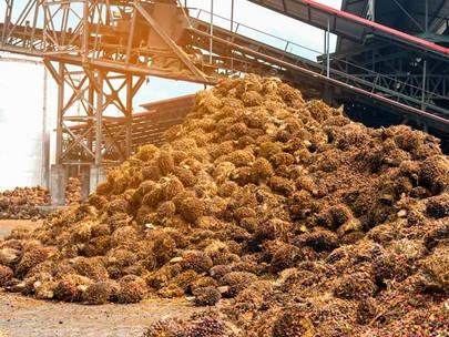 Teknologi yang disruptif mendorong inovasi dalam industri minyak kelapa sawit