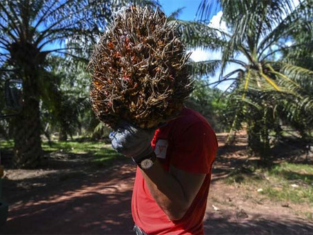 China's Palm Fuel Imports Soar To Record