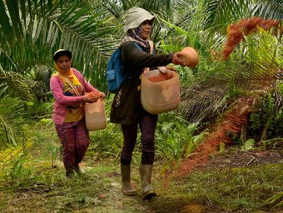 Indonesia Tidak Berpura-pura Seolah Industri Kelapa Sawit Tidak Bermasalah