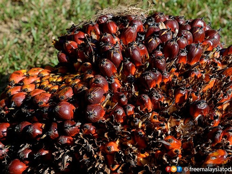 India Allots Licences to Buy 1.1 Million Tonnes of Refined Palm Olein from Indonesia