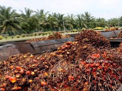 There's No Palm Oil Alternative