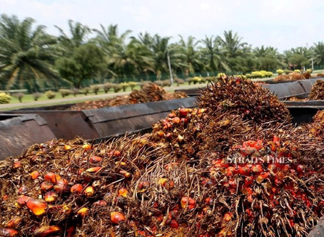 There's No Palm Oil Alternative
