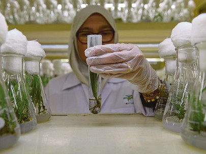 Malaysia Plants Hope for Palm Oil's Future in Dwarf Trees
