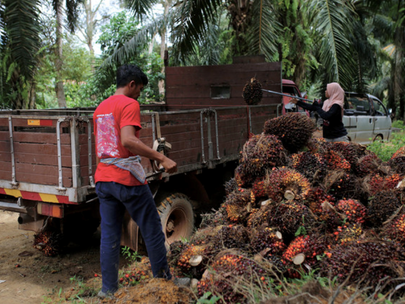 Malaysia Giving 100 Pct Effort on Sustainable Palm Oil