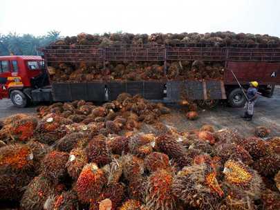 Nepal's Palm Oil Exports Could Suffer As India Suspends Import Licences