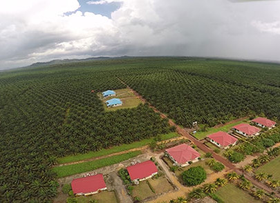 KLK to buy 60% stake in Indonesia oil palm firm for RM342 mil