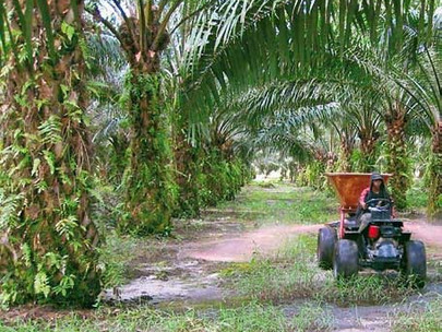 Sarawak Oil Palms Embarks On New Initiatives, Seeks Diversification