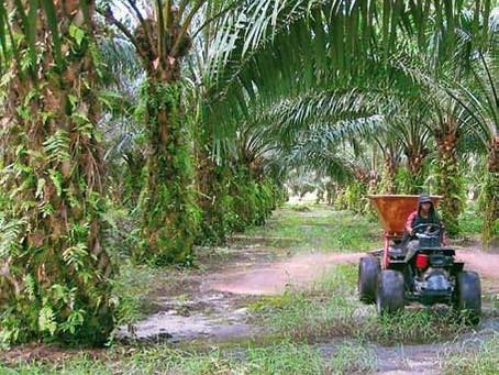 Sarawak Oil Palms Embarks On New Initiatives, Seeks Diversification