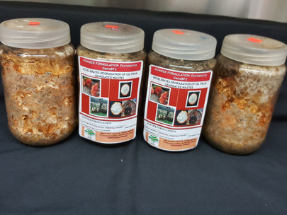 MPOB Formulates Technology To Accelerate Degradation Of Bsr-Infected Oil Palm Trunks