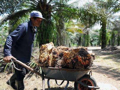Sanksi AS terhadap minyak kelapa sawit Malaysia mengkhawatirkan pemerintah Indonesia