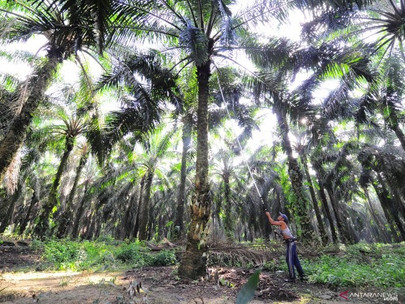 Indonesia Needs to Build Global Support for Palm Oil: Ministry