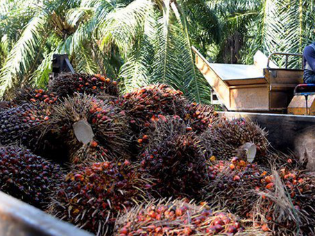 Innovation Is the Way to Fight EU Palm Oil Ban