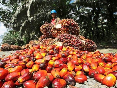 Advancing Palm Oil Industry