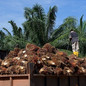 Politics, Not Science, Key to Easing EU Palm Oil Restrictions, Says Expert