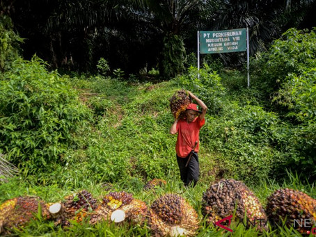Indonesian Oil, Gas Community Introduces Palm Oil Surfactant