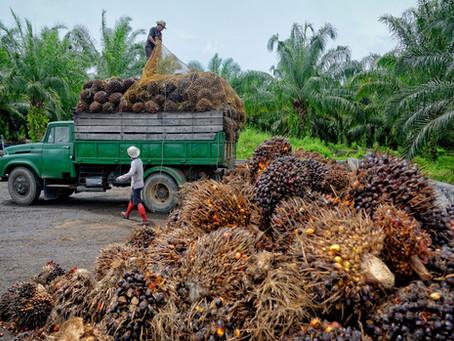 Permintaan Tiongkok dan India menaikkan harga minyak kelapa sawit meskipun ada tekanan dari AS