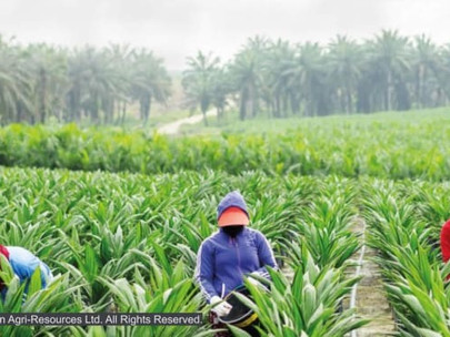 Q&A: Ensuring Sustainable Palm Oil Production amid a Pandemic