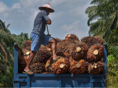 EU should not give in to anti-palm oil lobbies — MPOC