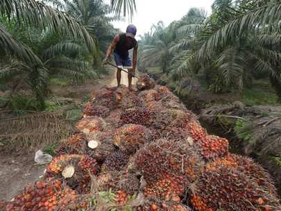 The Newly Constituted Board of Trustees, Bot, of The National Palm Produce Association of Nigeria,