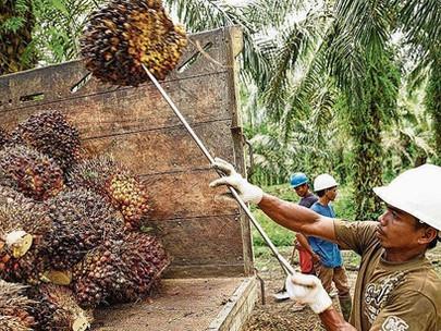 Minyak kelapa sawit menjadi sorotan karena Swiss melakukan pemungutan suara pada pakta perdangangan