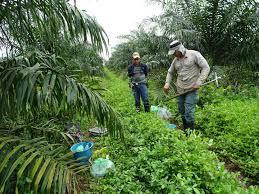 Utusan Indonesia ingin Kolombia bergabung dengan CPOPC