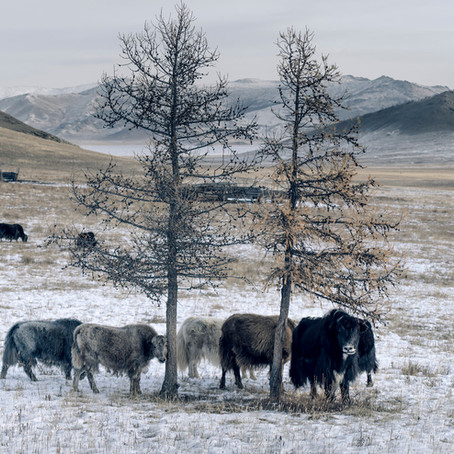 Tengri: Sustainable Style and Craftsmanship