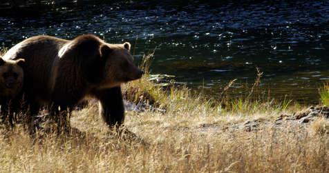 bear and cubs1.jpg