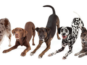 Now We're Talking: Decoding Your Dog's Body Language