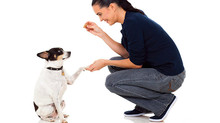 "The Importance of ""Instead"": Redirecting Your Pooch's Problematic Behavior"