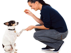 """The Importance of """"Instead"""": Redirecting Your Pooch's Problematic Behavior"""