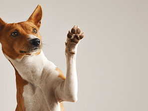Fun with Fido: Five Foundational Skills to Keep Your Dog Happy and Healthy this Summer