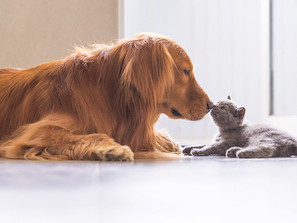 Like Cats and Dogs: Tips for Helping Your Furry Friends Get Along