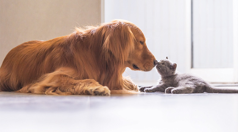 Mixed-pet households can be successfull!