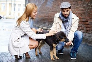 A Human Guide to Canine Etiquette